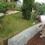 夏野菜を植えました【ココカラいっぽ】