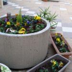 中庭にお花を植えました(^_^) 【たけきりユニット】