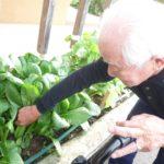 かぶと小松菜を収穫をしました♪【デイサービス ココカラ】